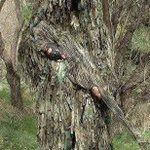 あなたは見つけられるかな!? 自然に擬態するギリースーツがスゴイ!!