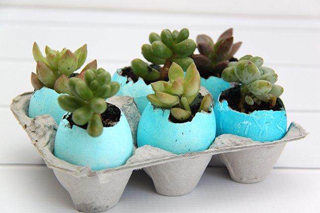 #Diy to create #Easter #Packaging #Succulents. Divertiti a creare delle simpatiche #decorazioni per #Pasqua con #uova #colori e #piantesucculente https://t.co/paucVR7l3T https://t.co/a4bQ23xzl6