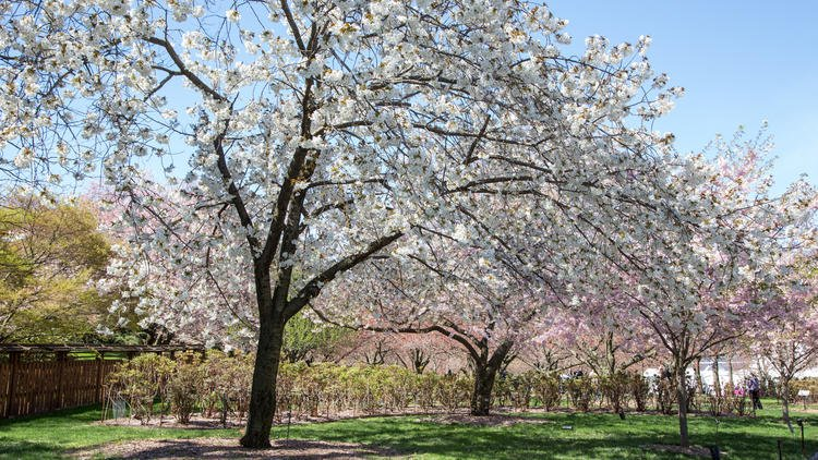 April is only starting... 52 epic things to do in #NYC in April timeout.com/newyork/news/5…