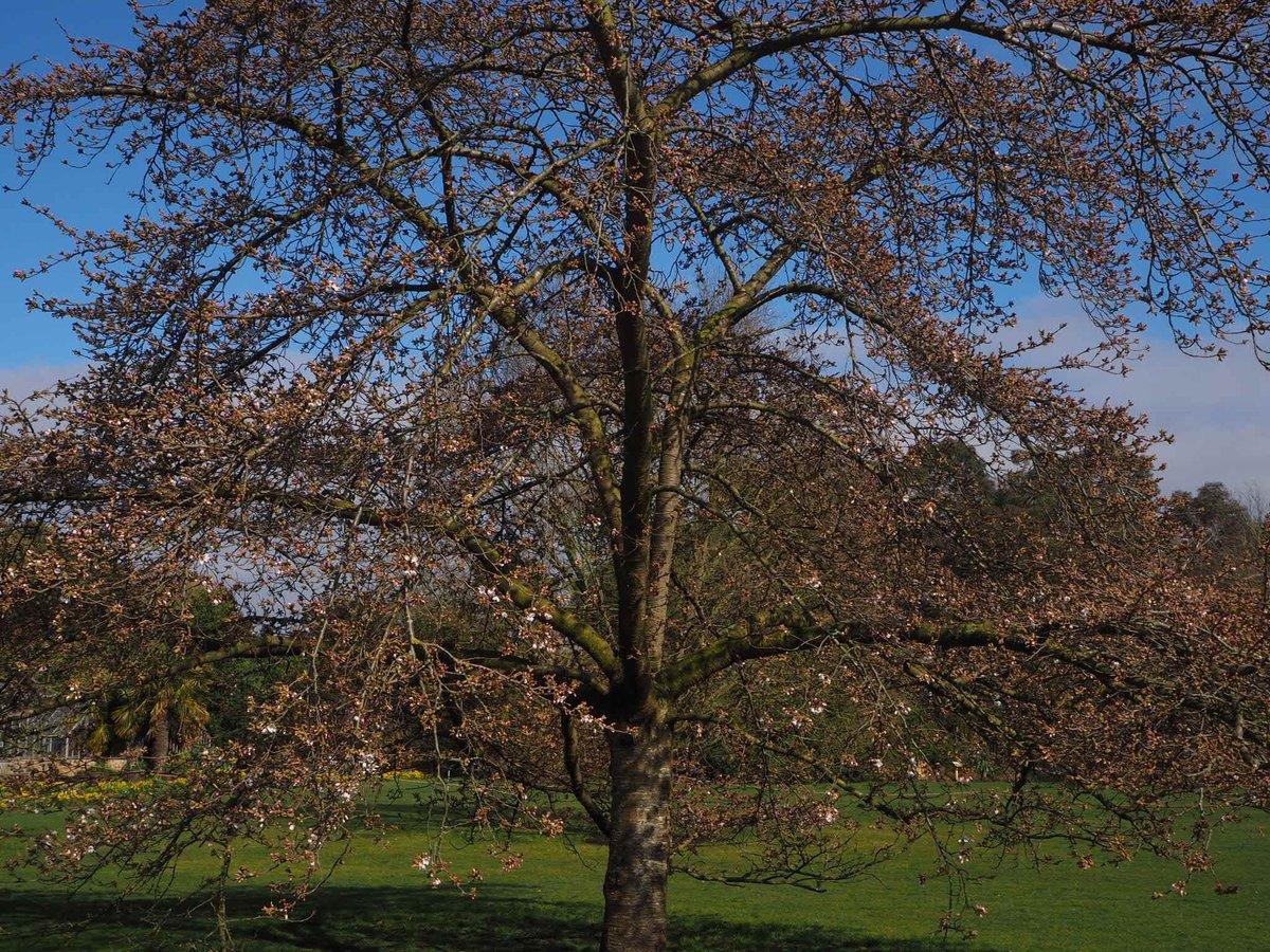 Cam Botanic Garden on Twitter: \