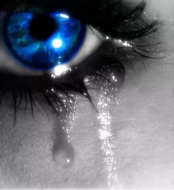 йорк терьеры ммс картинки грустные до слез или выпить вечерний