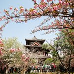 Image for the Tweet beginning: Located in #Shaanxi, Qinglong Temple