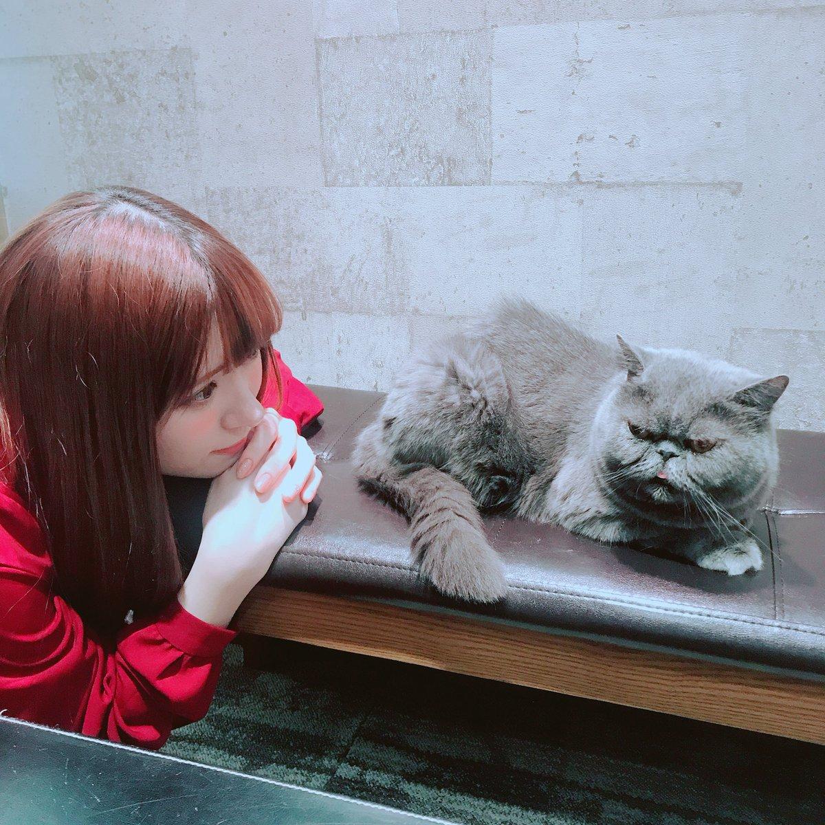 猫と河西美希