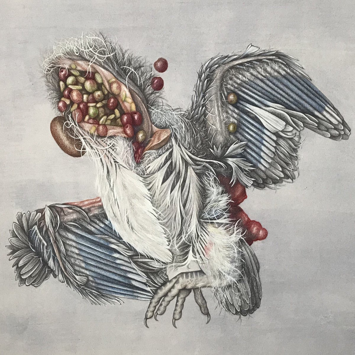 Francesca Corra On Twitter Doing A Series Of Drawings Of Roadkill Dead Animals In London Not Sure What Happened To This One Possibly A Fledgling That Got Hit By A Car And Had