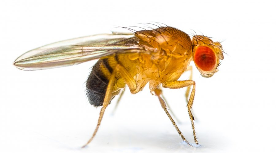 "We need a Disney Princess who can pronounce ""Drosophila"". https://t.co/rHvUNPuVBZ"