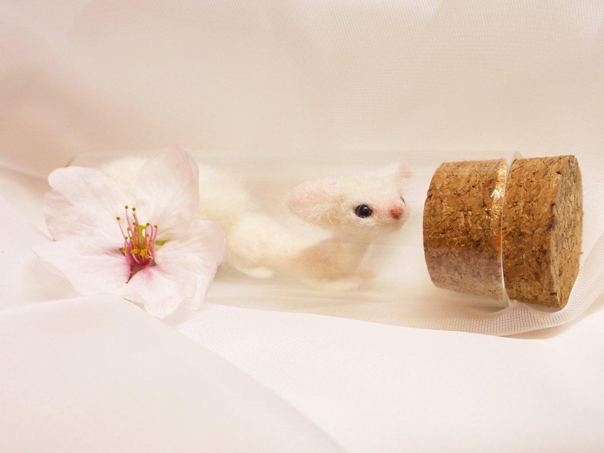 #存在しないライフハック  新鮮な桜の花と管狐の毛、水晶を小瓶に入れて月明かりに当てると豆狐が召喚できる。