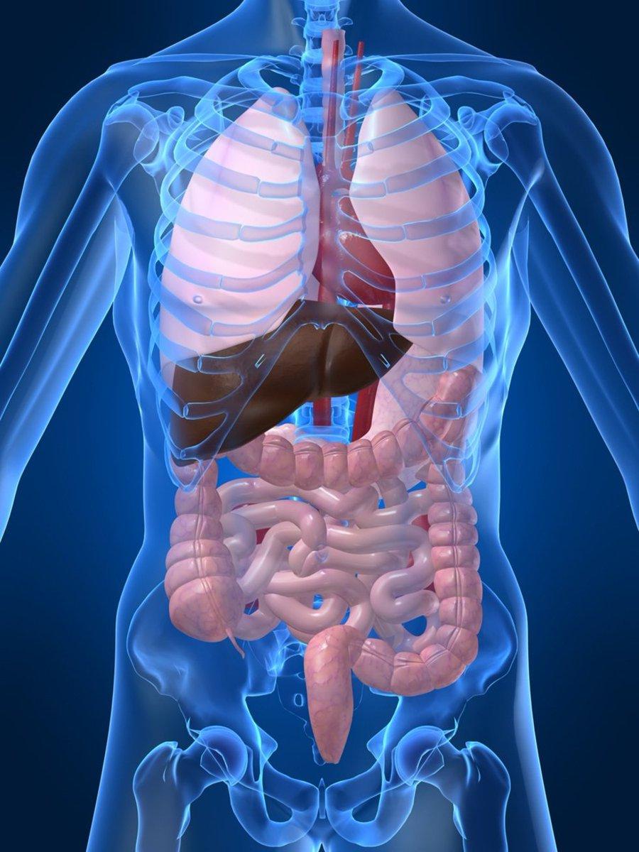 Anatomía humana: todas las noticias de última hora, fotos y vídeos ...