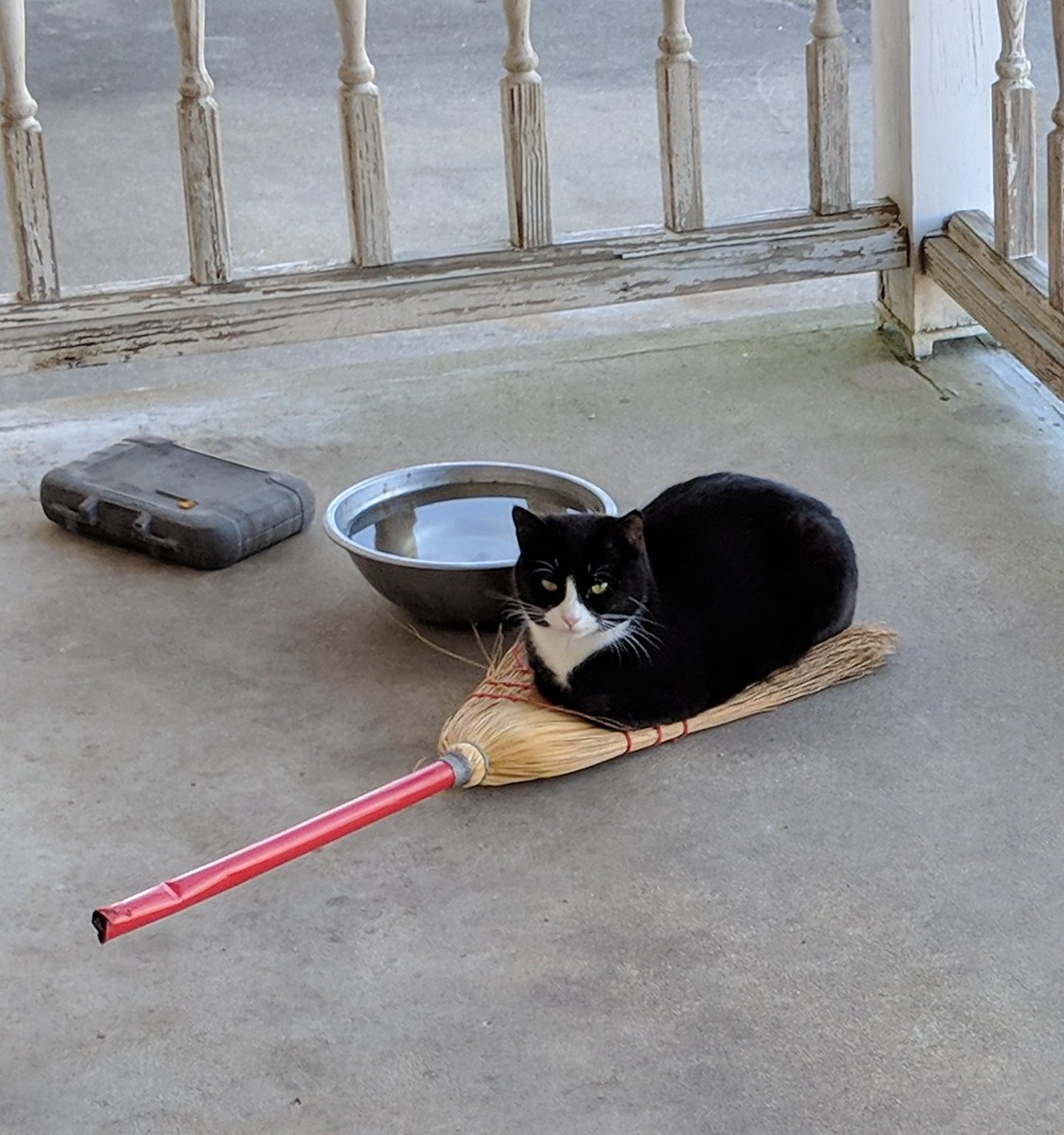 black cat laying on bristle part of broom, with feet tucked under her