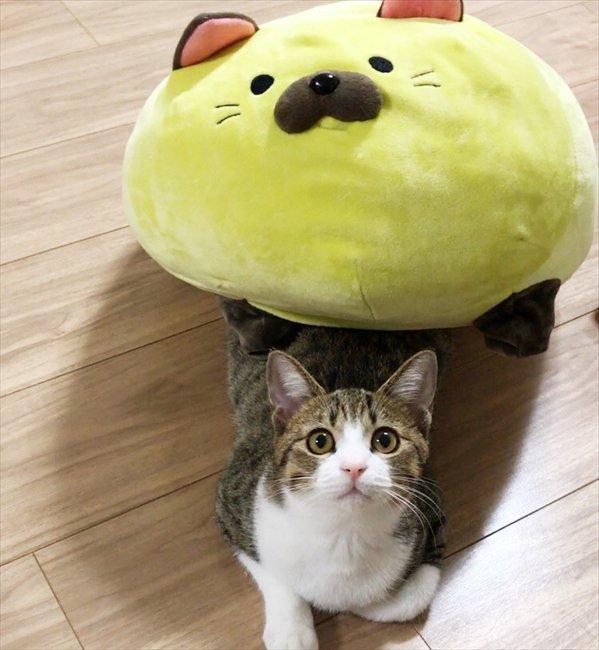 猫 画像 cat image なかよし丸くてやわらかいお友達ニャ 猫のぬいぐるみで遊ぶ
