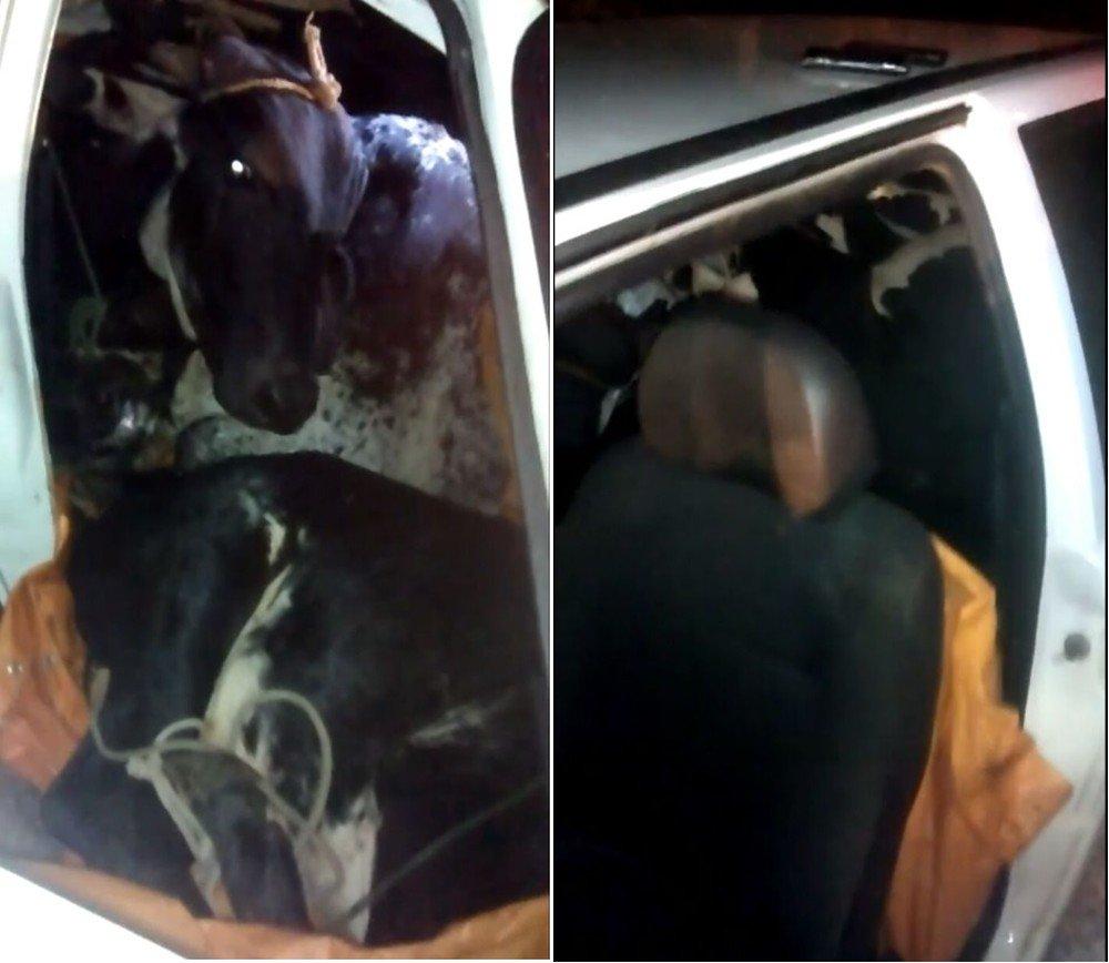Dupla é presa com 4 vacas furtadas dentro de Uno  https://t.co/8tuCLOwmlu #G1