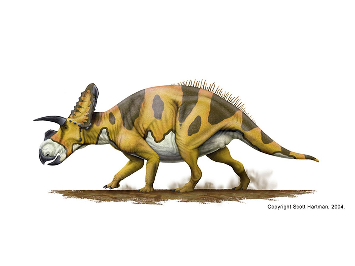 two horned dinosaur