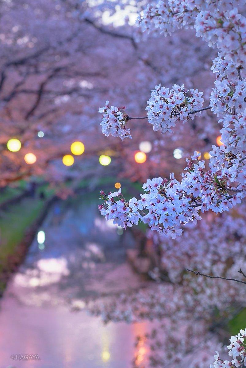 撮り続けるのは、花が散り雲は流れて消えてしまうから。 (一昨日、埼玉県にて撮影) 今日もお疲れさまでした。明日もおだやかな1日になりますように。