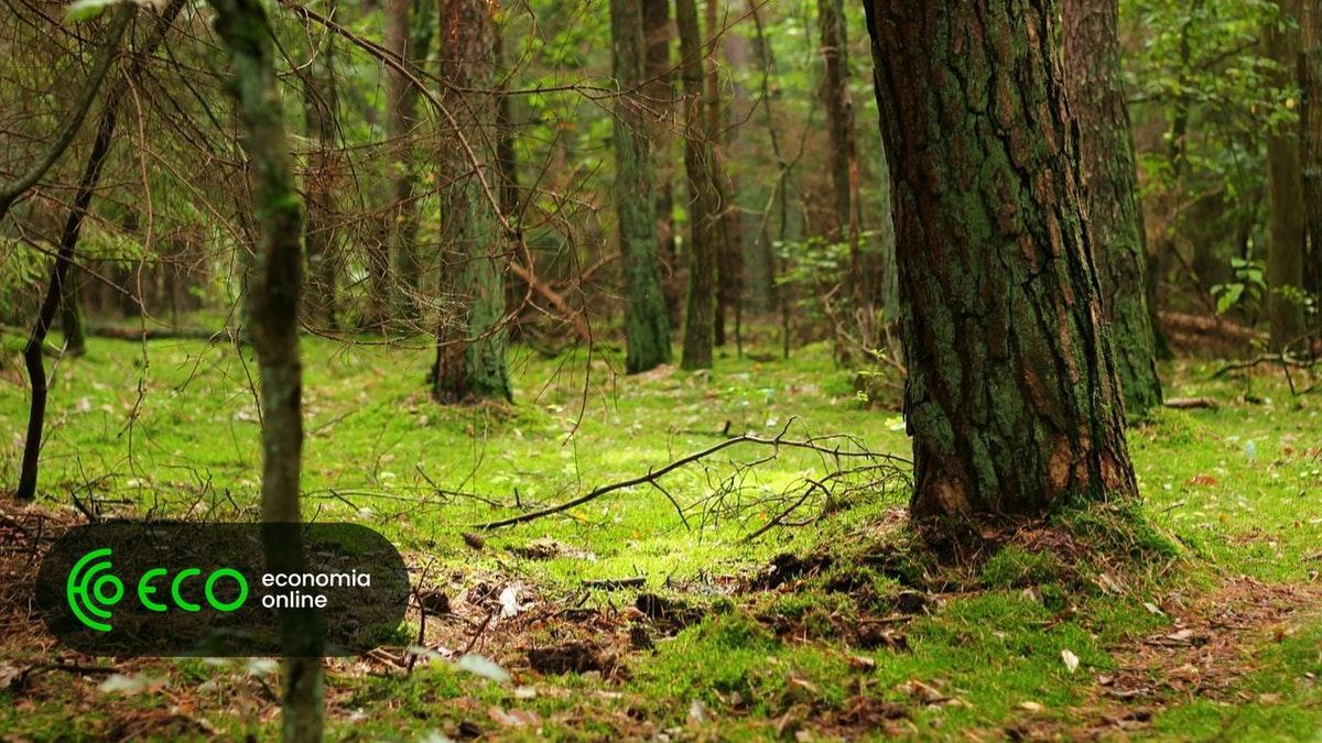 Começa fiscalização às florestas. Multas adiadas. #Sociedade https://t.co/StYsfj5Nz5