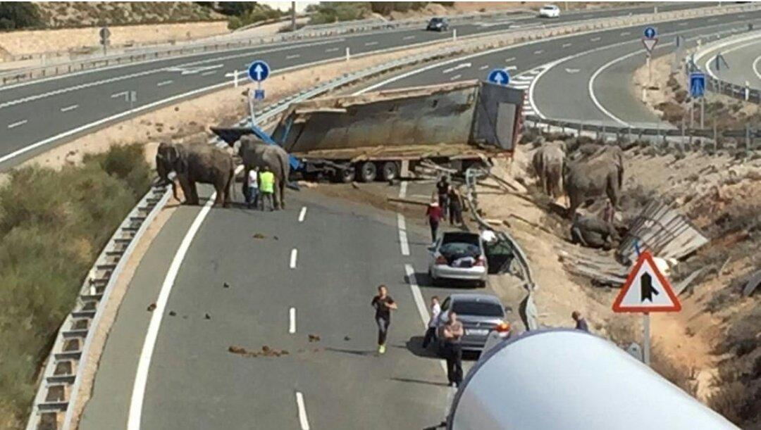 Una manada de elefantes corta una ruta en España