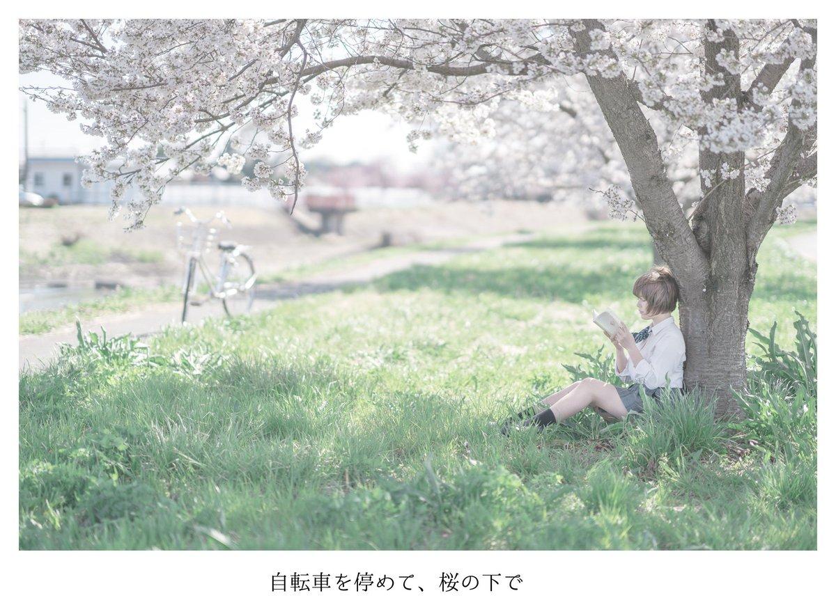 木の下 で 桜の
