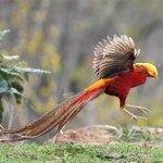 Image for the Tweet beginning: Heralds of #spring: Particolored birds