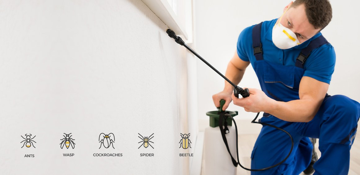 Askai Pest and Termite services. Our team control all pest. Did pest can is in your house so dont worry just call us. Contact no:0303-2099386,0302-7381878. Website:http://askaripestcontrols.com/ #termite #pest #control #askari #pest #control  #spider #cocroaches #wasp #best #pest #contr