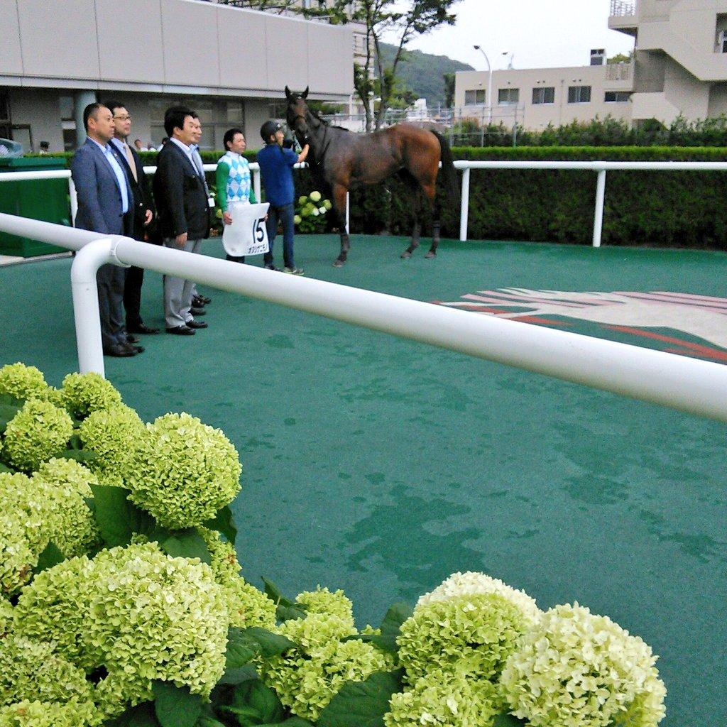 福島5R新馬戦はオヌシナニモノが6馬身差で圧勝。カレンブラックヒルの子で、鞍上は内田博幸騎手 #福島競馬