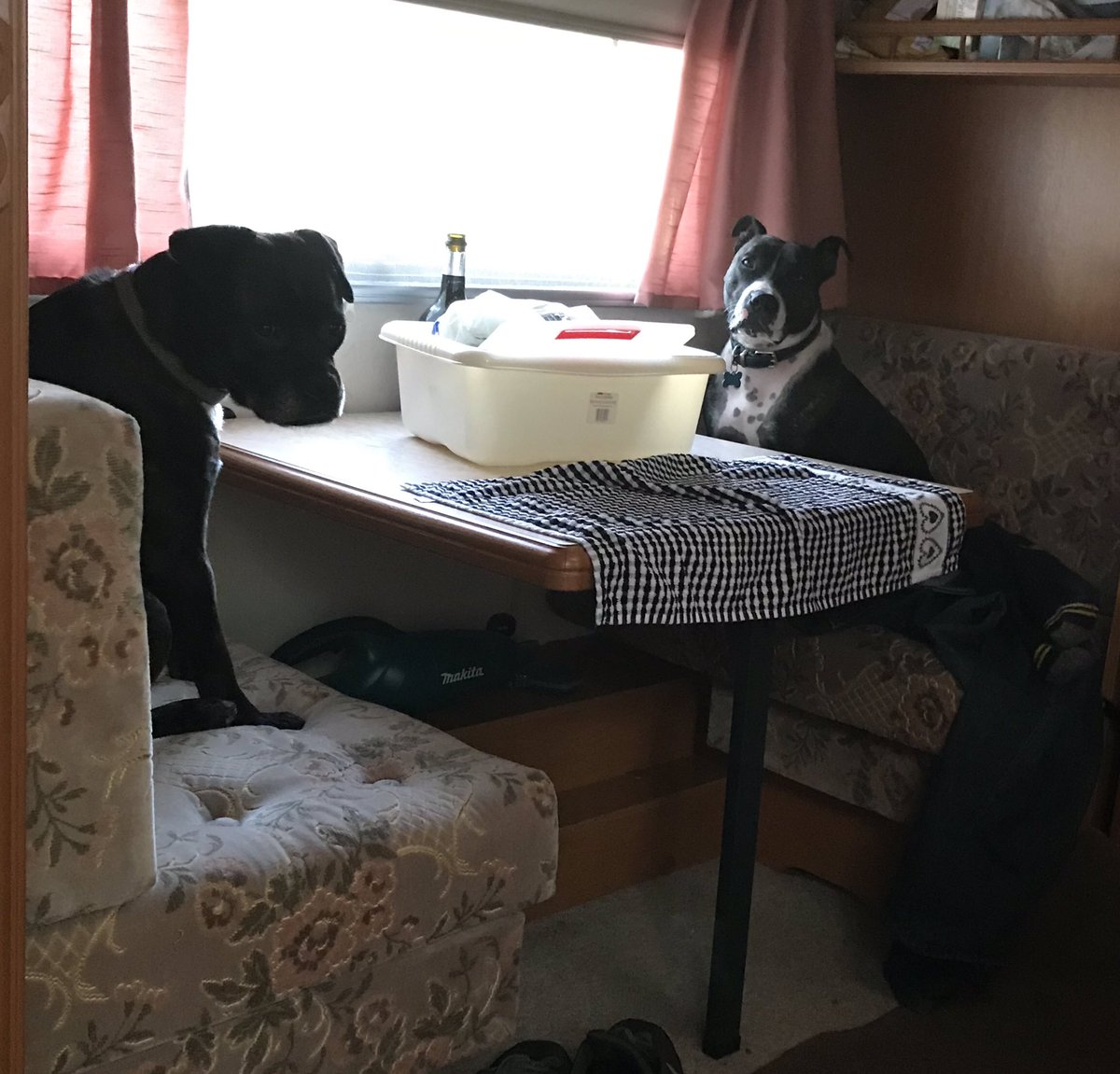 Waiting for breakfast  #AdoptDontShop #rescues<br>http://pic.twitter.com/SIf1gJS75o