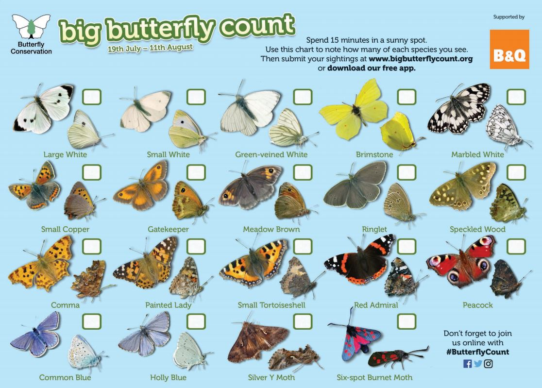 Such a wonderful thing to get pupils involved in, is your school taking part? #ButterflyCount