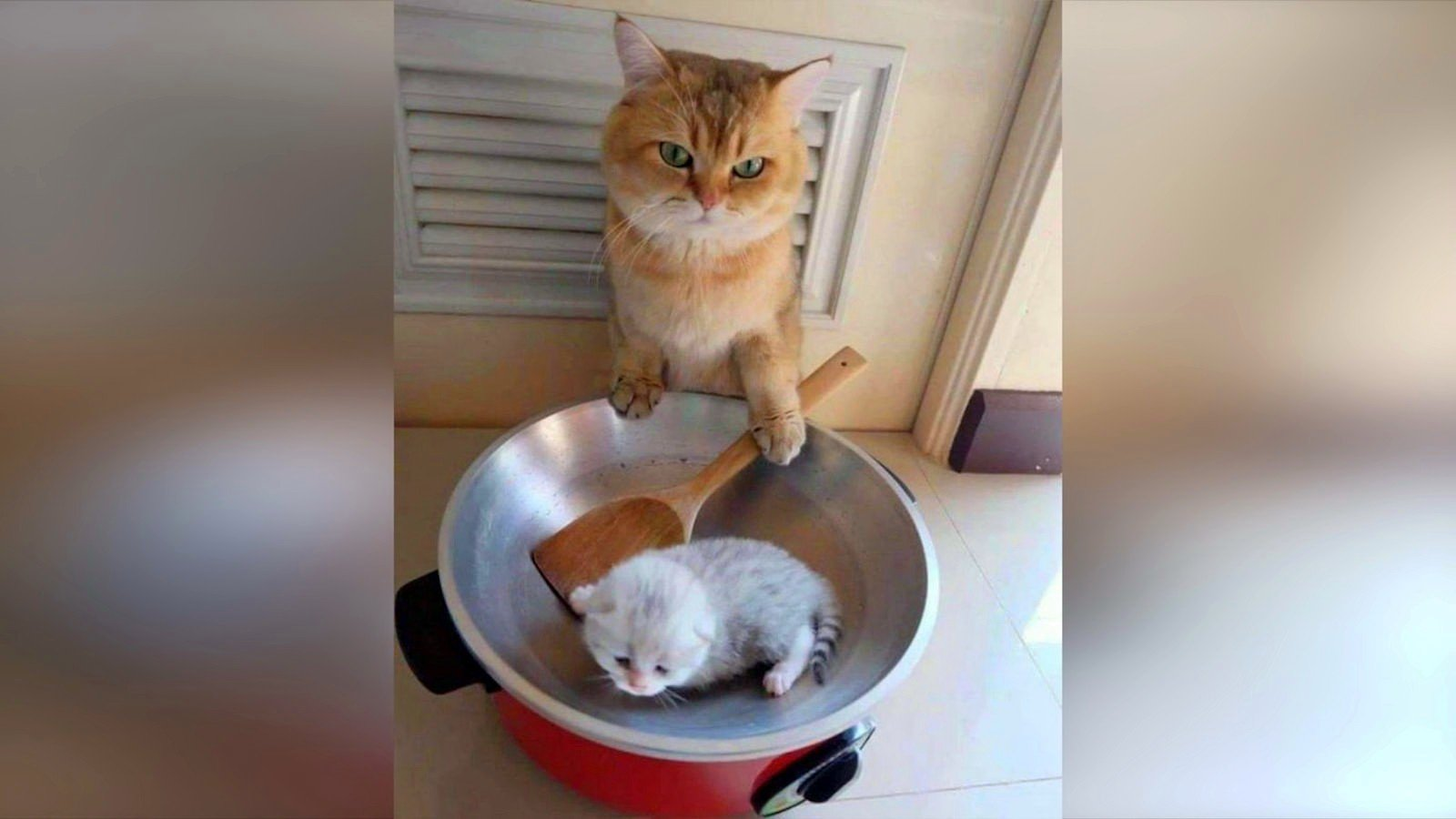 картинки кошек самые смешные до слез будущее