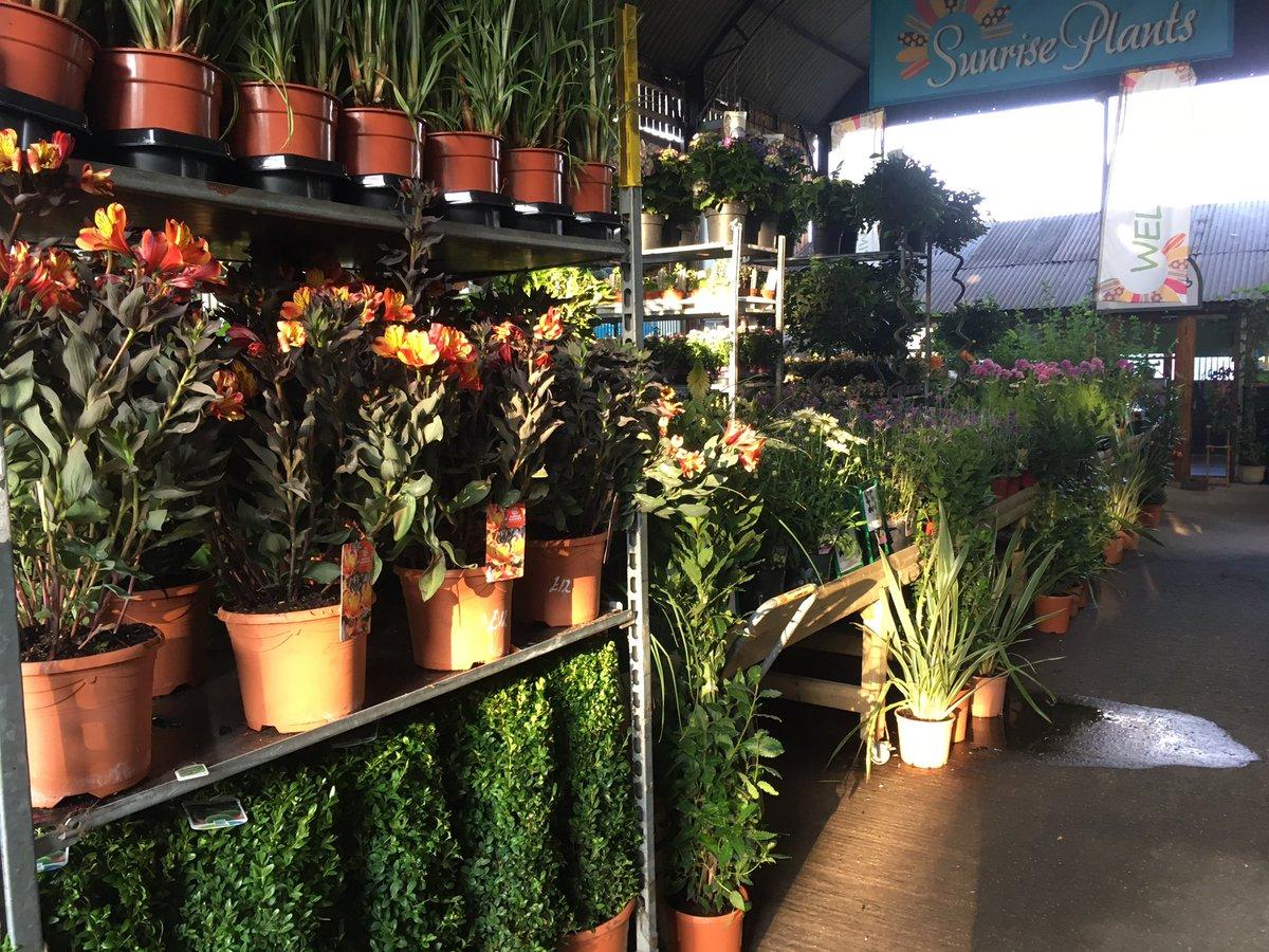 sunriseplants photo