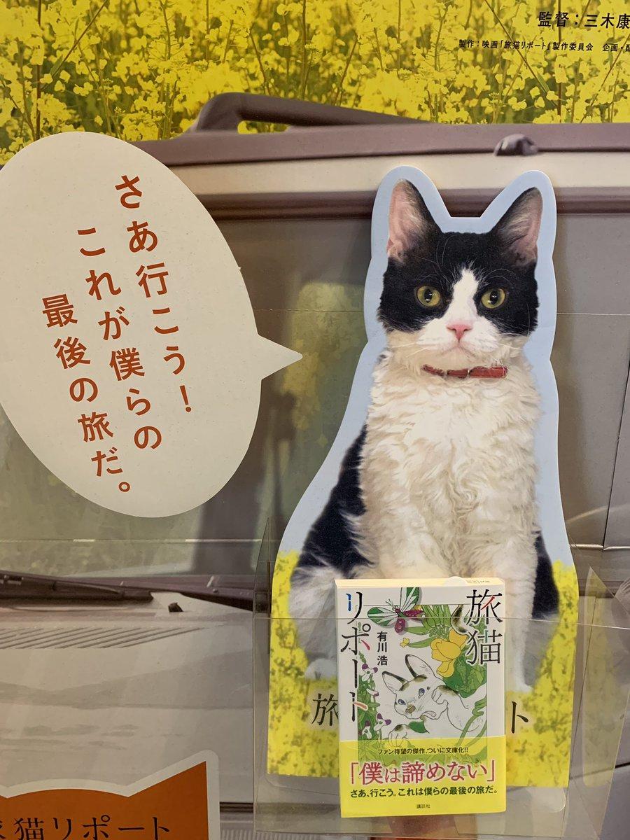 旅 猫 リポート 読書 感想 文