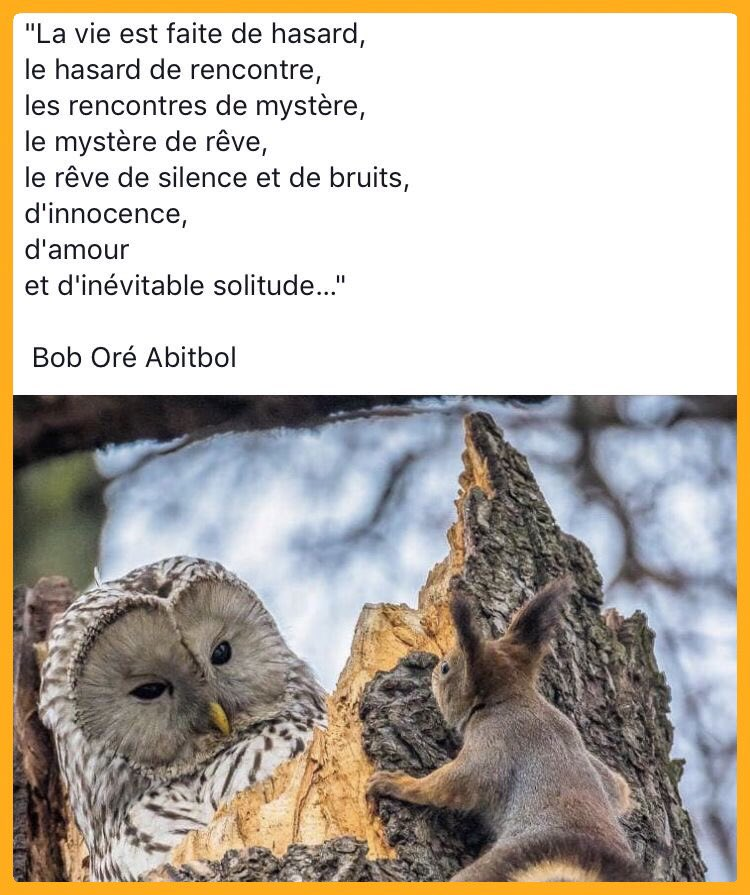 Pensée du matin 🤔 #penseepositive  #amour  #psycho #psychologie #mot #psychanalyse #psy #reve #psychotherapie #sophrologie #zen #developpementpersonnel #coaching #relaxation #bienetre #meditation #chemindevie #croireensoi #estimedesoi #bonheur #confianceensoi #mercilavie