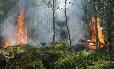 The key to reducing #Amazon #wildfires could be found by increasing #sustainable land management #research by an international team of researchers led by @prensa_inpe and including @aragao_luiz finds http://ow.ly/ei5250v5JTd