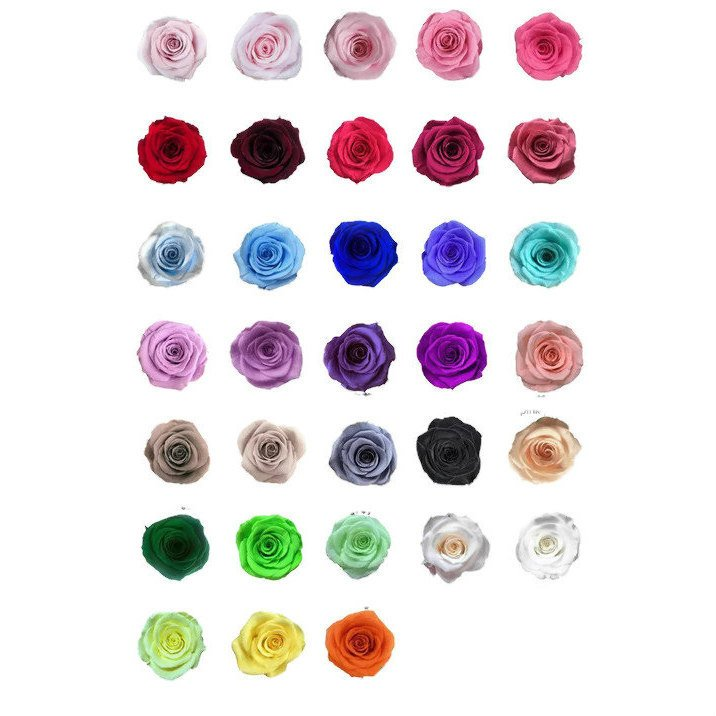 Preserved roses 3.50 each, real roses that have been preserved to look beautiful for years  https:// etsy.me/2Z19AG9     #housewares #homedecor #wedding #valentinesday #entryway #preservedrose #diywedding #diybride #flor<br>http://pic.twitter.com/WzMy5zTypC