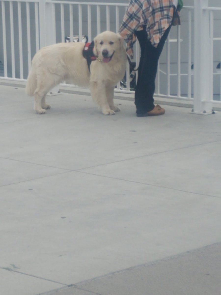 #sdccdogs this pupper isn't in costume but it is very good 12/10 would pet <br>http://pic.twitter.com/PpKnS937cy