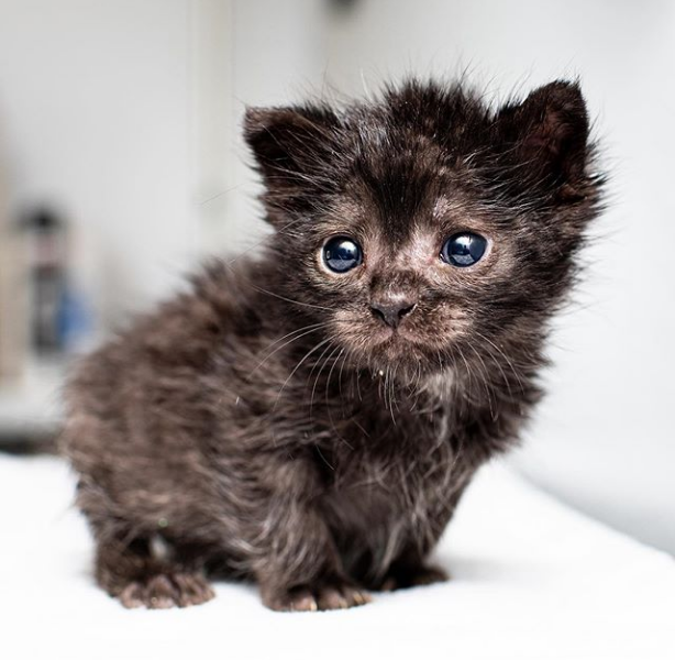 How is this little nugget even real?! #repost @iamthecatphotographer