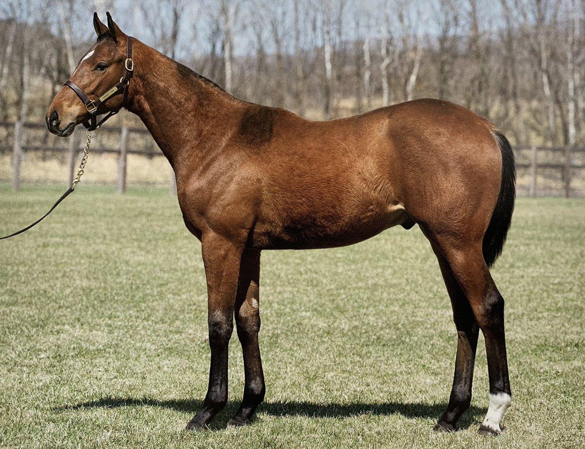 【GIサラブレッドクラブ2019  募集馬】  G16  ナターレ18(父ジャスタウェイ)  馬体バランス良く、胸幅狭く深さがあり、心肺機能の高さが伺え、トモの容量も豊富でいかにもスピードありそうな良い馬体をしています。 歩様も良いです。 価格的に掘り出し物の匂いがプンプンします。 #競馬  #一口馬主