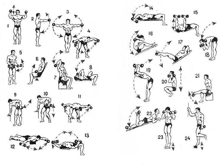 комплексы упражнений с гантелями в картинках моем