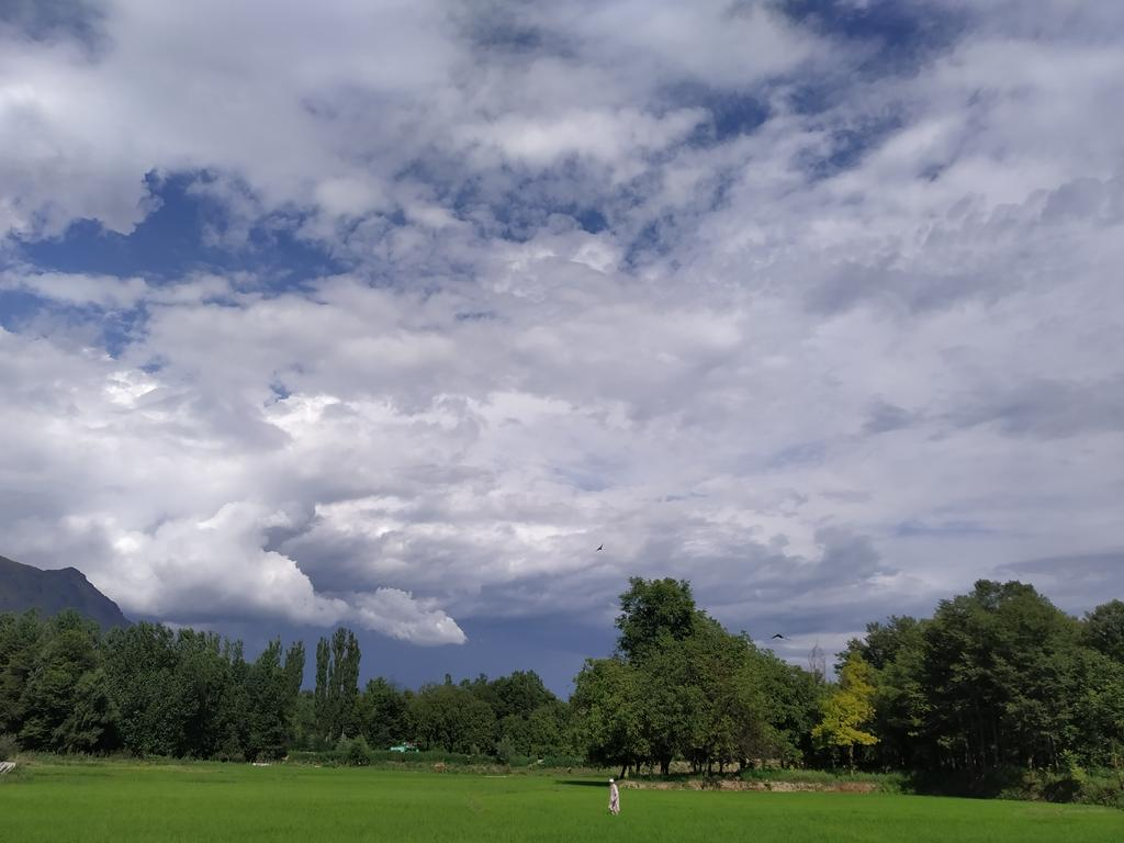 Beautiful picture with White clouds, sky, trees, green leaves, paddy fields #Kashmir #beauty #trees #nature #landscape #photography #photooftheday #mobilephotography #photographer #nofilter #feelthenature #naturebeauty #beautyofsky #kashmirloverspic.twitter.com/1LE9zfhMKT