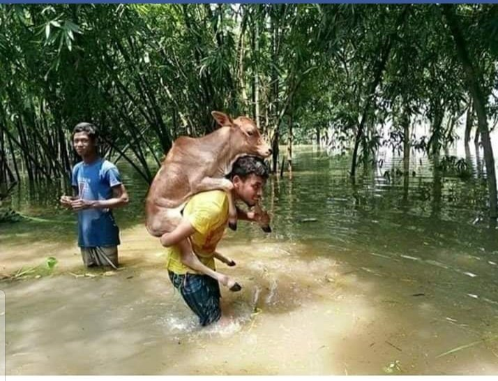 Image result for China, Korea and Canada photos of the Assam floods from satellite