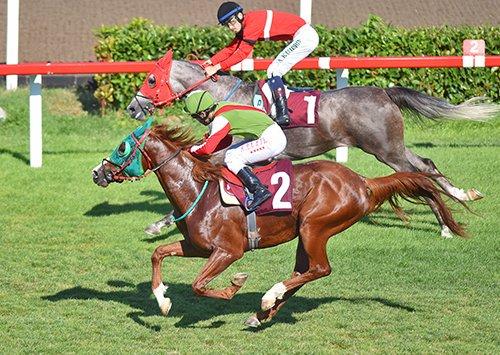 Kemal Ararat Koşusu'nun kazananı CANDARBEYİ    http://www.tjk.org/TR/YarisSever/News/Page/33450
