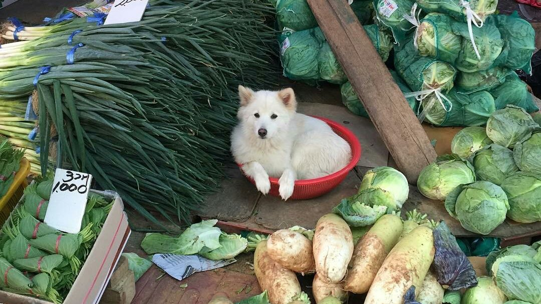welcome traveler. would you by chance be interested in my various veggies
