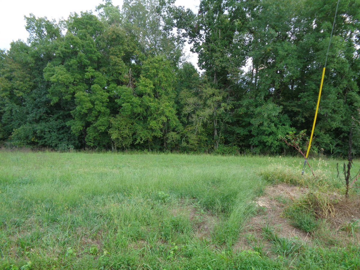 See a virtual tour of our listing on 0 Mary Alice Rd #Leoma #TN  #realestate http://tour.remax-tennessee.com/home/AXRNTS