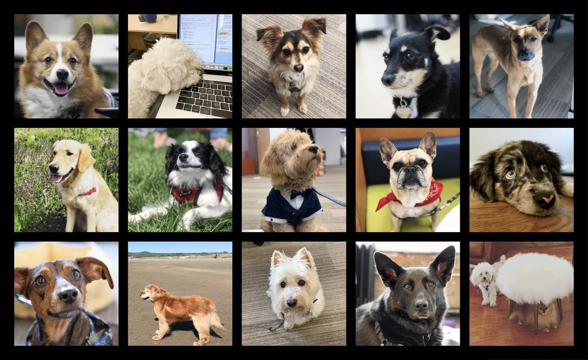 Happy Figma Friday! Here are some of our beloved 4-legged friends saying have a great weekend! 🐾 buff.ly/2SAzdLP