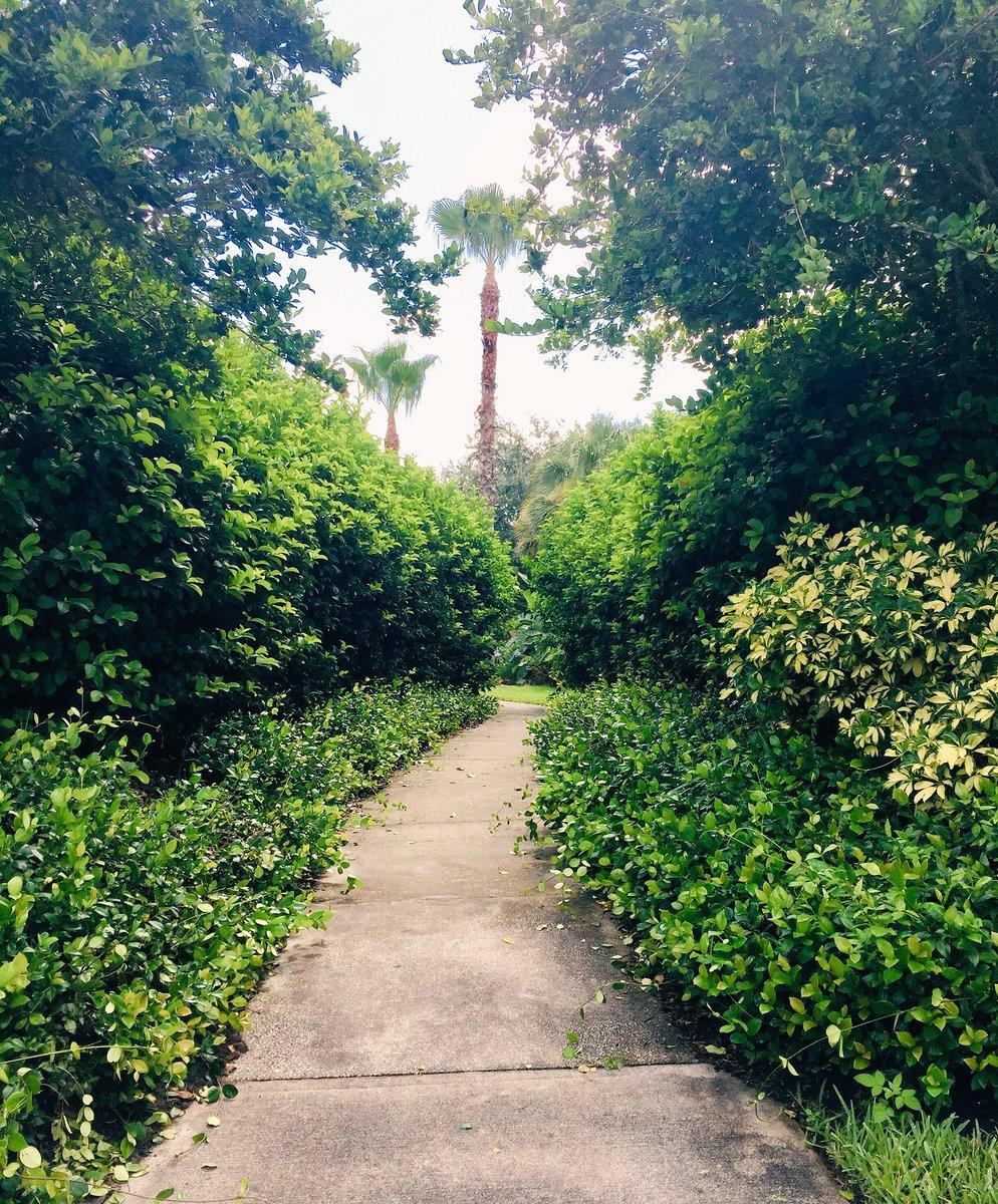 Summer walks = plotting time.  #amwriting #writingcommunity <br>http://pic.twitter.com/KbwtP6UWQS