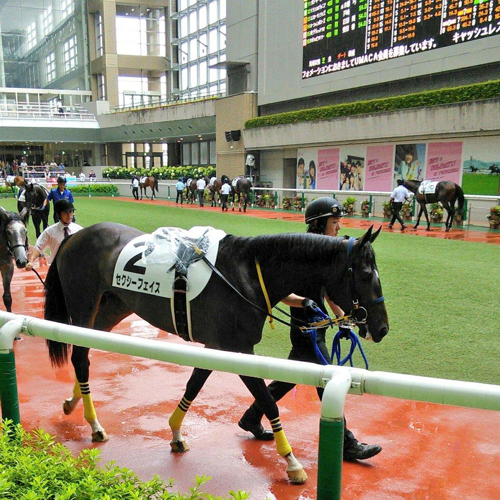 福島5R新馬戦。エピファネイアの娘、セクシーフェイス #福島競馬