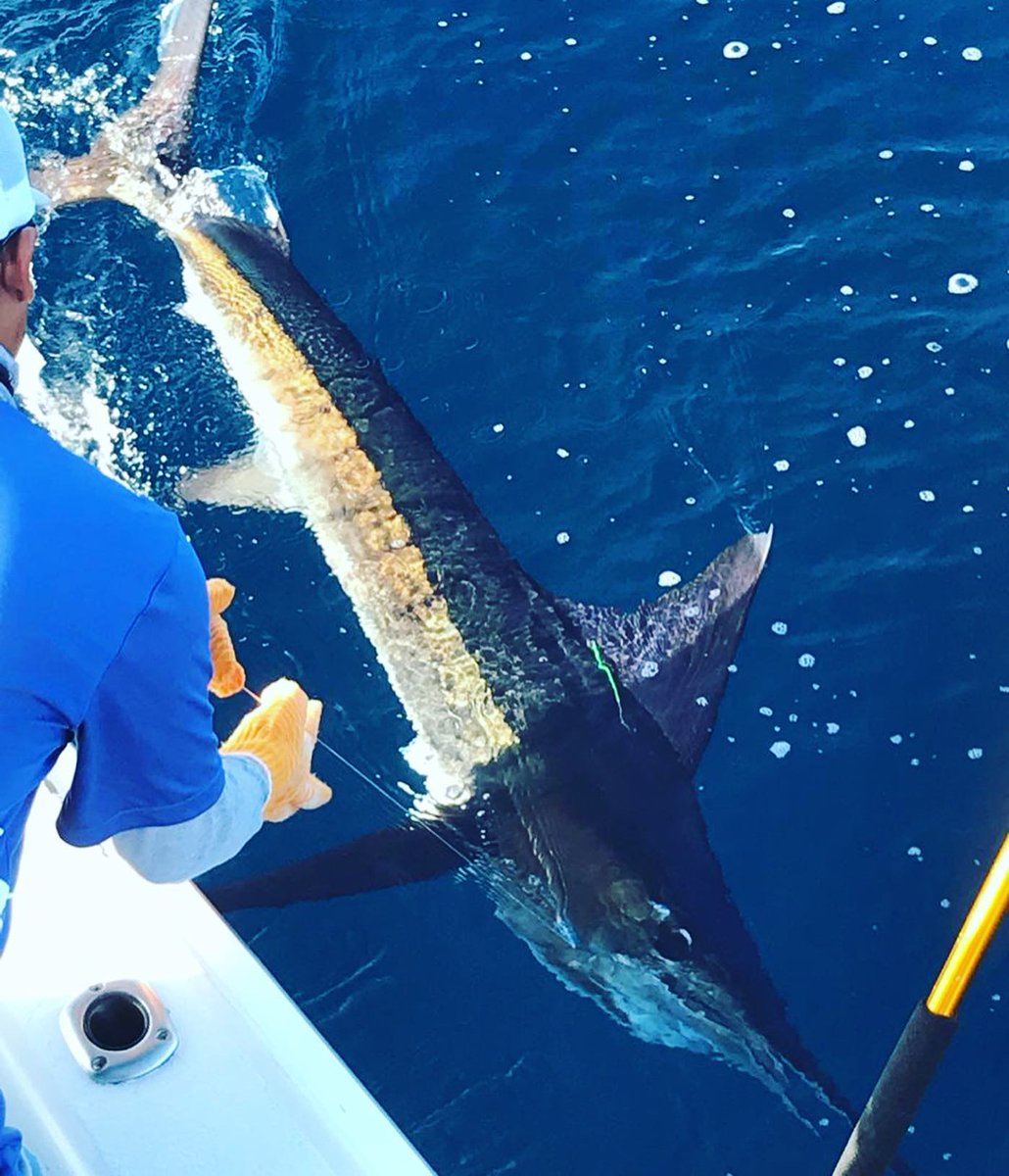 Cabo, MX - Ruthless released 9 Striped Marlin.