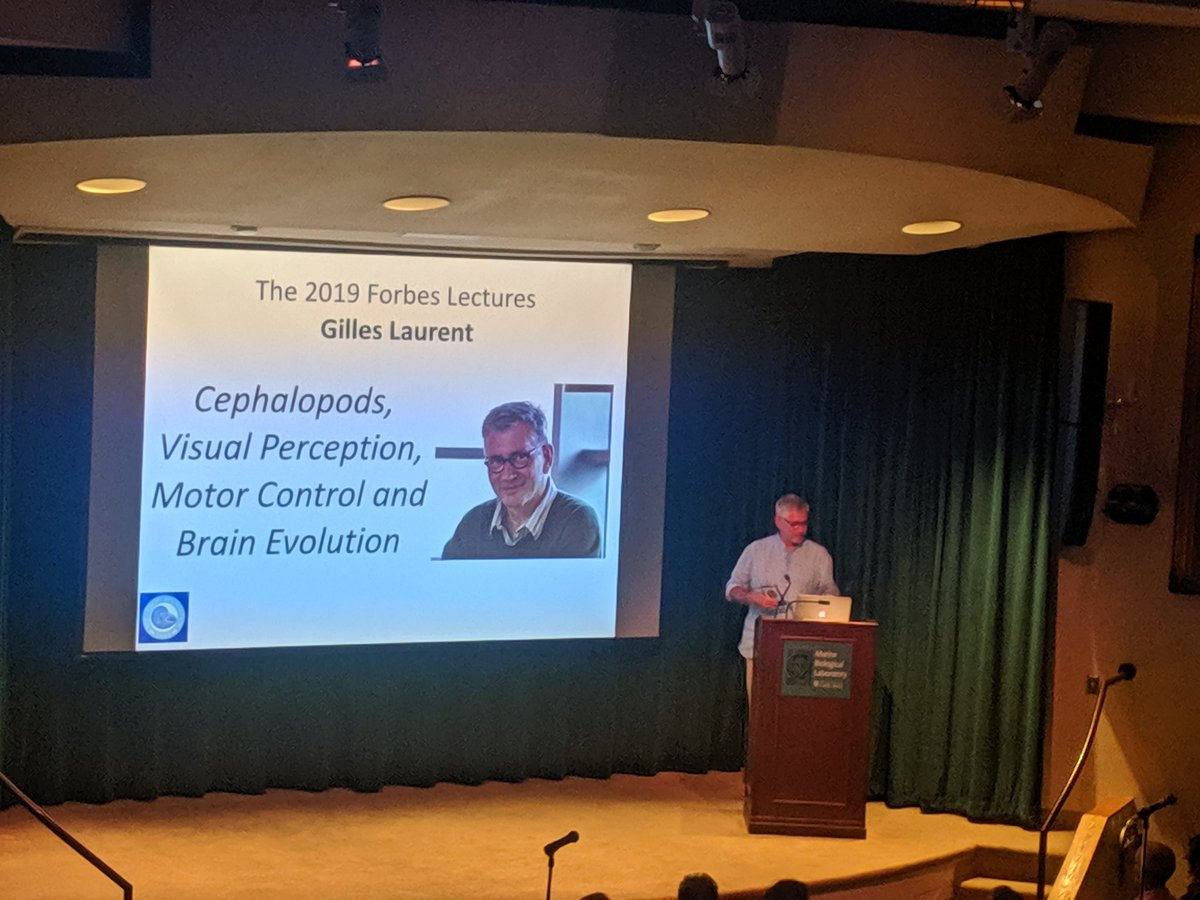 Attending the Forbes lecture at Woods Hole and am enjoying Gilles Laurent describe the latest in cephalopods. A great inspiration to include diverse model organisms in neuroscience research. #woodshole<br>http://pic.twitter.com/6sLhqanw3k