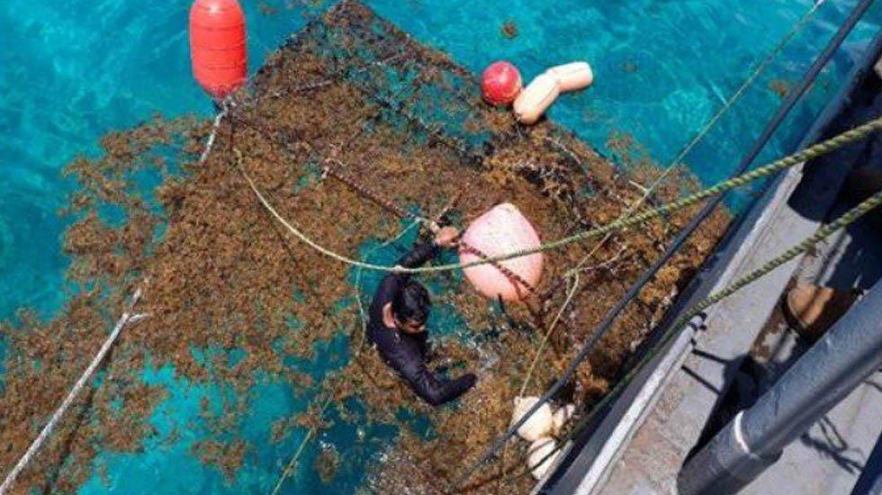 Suman más de 6 mil toneladas de sargazo recolectadas en Quintana Roo en julio http://bit.ly/2GliDu6