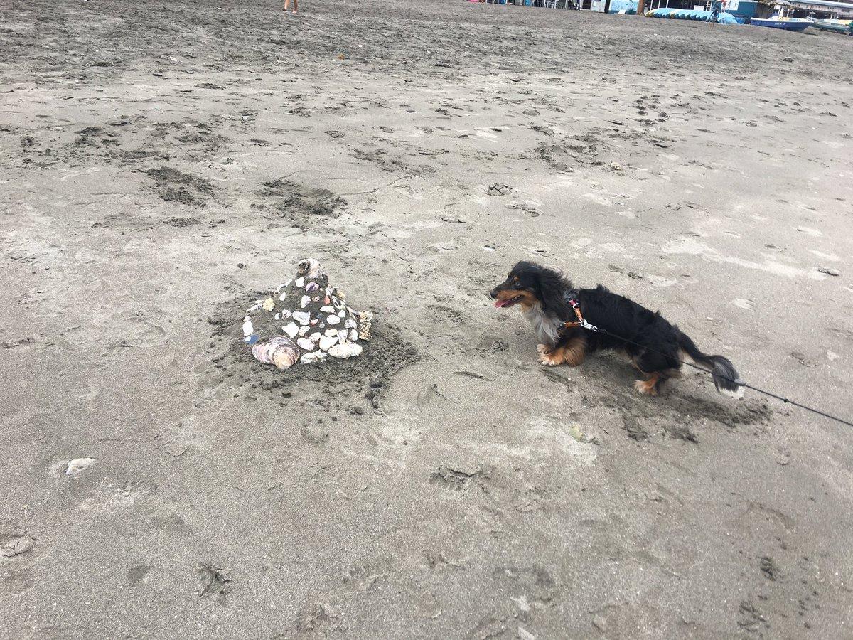 うちの犬はミニチュアダックス(って血統書には書いてあるけど、雑種っぽい。)なんだけどプードルが大好きで、和犬には吠えてしまう。でも基本犬より犬のおしっこの匂いの方が好きなので、お散歩行くとフガフガしてばっかり。