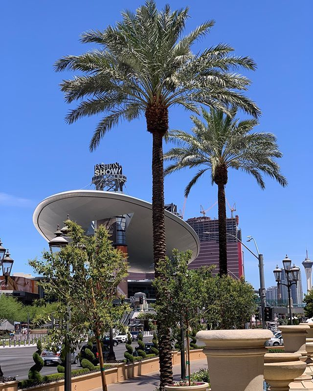 Fashion Show Mall Las Vegas or a UFO under palm trees in the