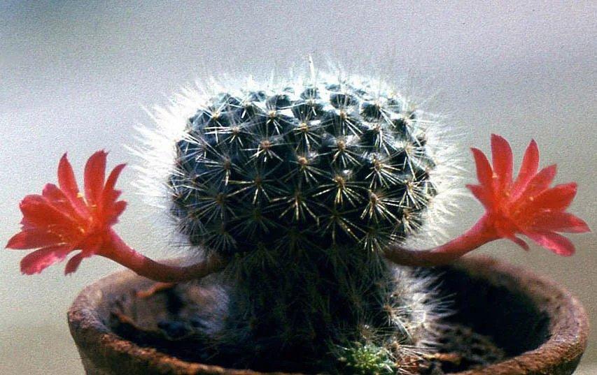 Прикол картинки растения