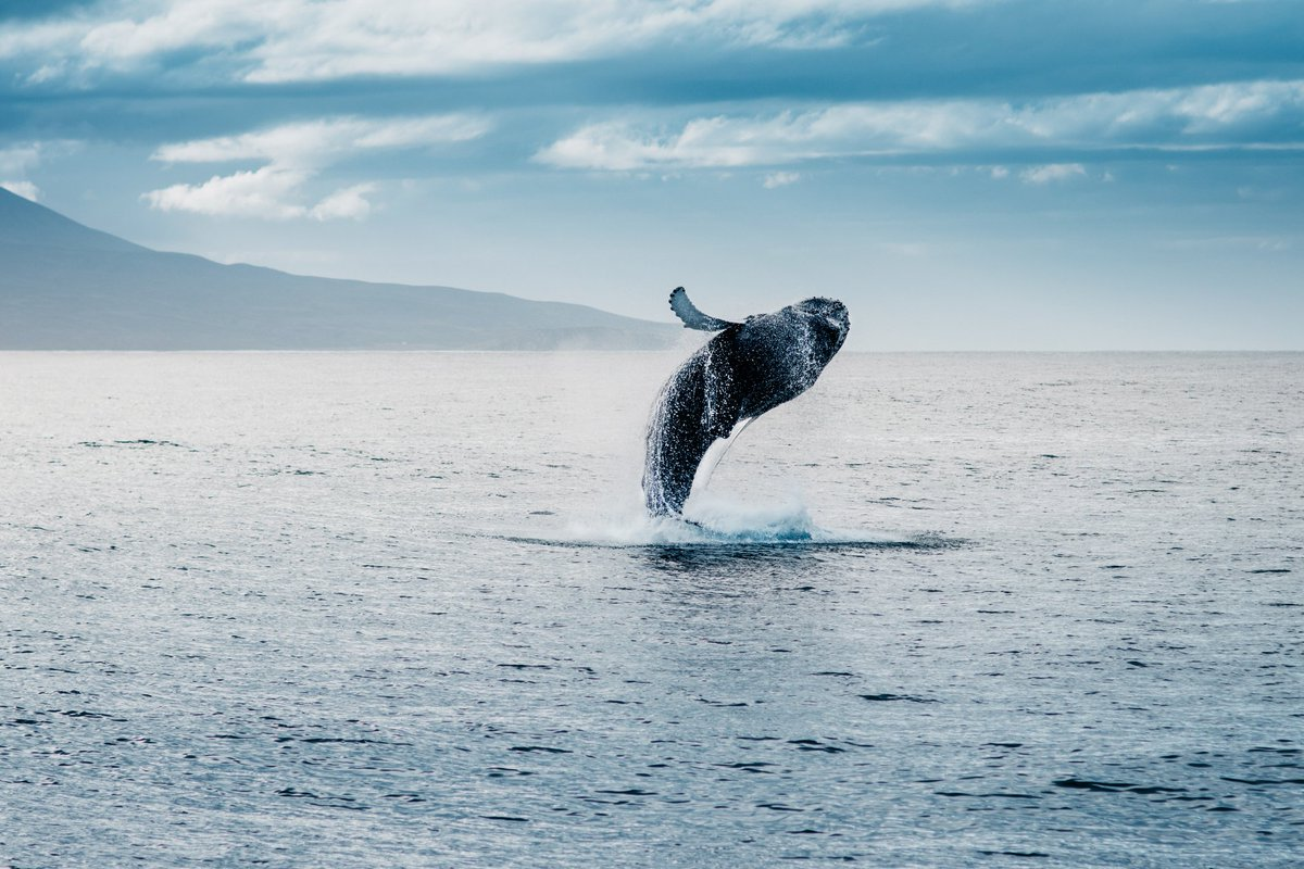 Our #Ocean  🌊stabilizes climate 🌊produces oxygen 🌊is the largest eco-system of our world  We have a once in a lifetime opportunity to #SaveOurOcean, let's not waste it!  https://on.unesco.org/2StNbPw #OceanScience