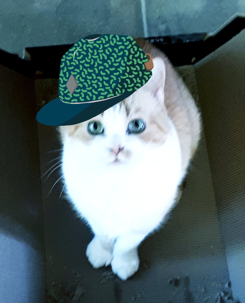 My name is Emma,  I'm a silly little cat.  It's very hot and sunny so I'm wearing my hat.  Monday to Fwiday I sleep the time away.  But #caturday comes and I pawty all day. <br>http://pic.twitter.com/VS8b6bqKKH